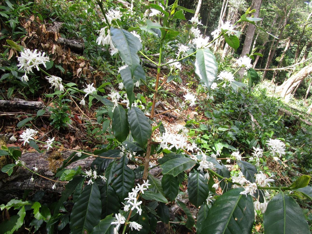 farms misty mountain flowering 2