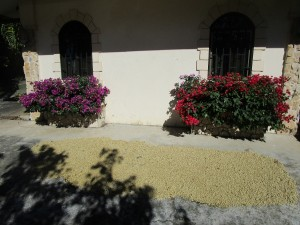 Fennario-proces-patio