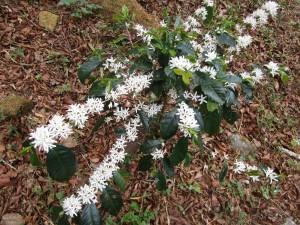 misty-mountain-flower