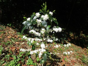 misty-mountain-flowering