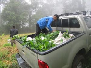 misty-mountain-planting
